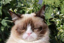 Grumpy Cat / by Katey Howard