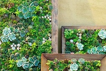 hanging wall garden