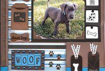 Pet Craft Ideas / by Denise Calhoun