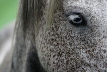 For the love of horses / by Jennifer Fleury Hiscox
