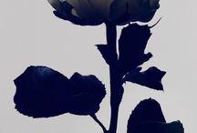 Roses / by Melissa Noe