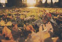 Fall Inspirations / 0