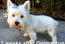 Dog remedies