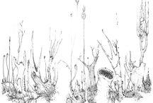 illustrations & bd