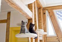 Gym gatos