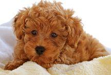 Puppy's  / by Sally Jane Cutler