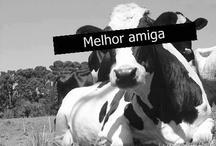 I love cows!