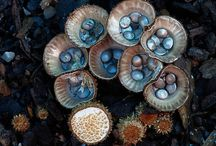 Funky Fungi Pics / Interesting, artistic and outright neat looking mushroom pics.