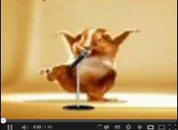 Animowane / Śmieszne animowane filmy i filmiki z całego świata