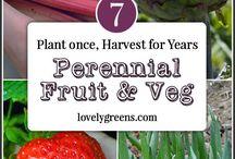 Perennial Fruit & Veg