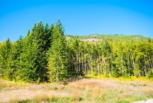 Land for Sale Vernon BC / Vernon, Kelowna, Spallumcheen, Armstrong & Shuswap Property, Land, Houses & Building Lots for sale. Lakefront, Rural, Country, Farmland and Urban options.