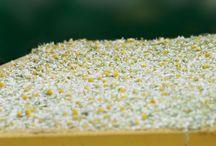 Von unseren Feldern auf Deine Haut / Entdecke, wie Yves Rochers Pure Camille Linie entwickwelt wurde: Von unseren Feldern auf Deine Haut!