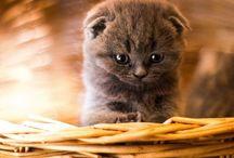 The Kittens / O mačičkách