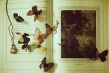 Fauna / by Lindsay Brillson