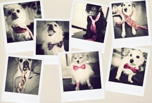 Dogs Wearing Ties / Board of dapper dogs wearing neckties and bow ties. Who doesn't love to dress up their dog with a handsome tie. Here are our favorite dog + tie photos. / by Bows-N-Ties | Inspiration for Men's Ties, Bow Ties, & Neckties