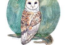 Birds by Anastasy Siilin / Watercolor illustration of birds by Anastasy Andrianova (Siilin) anastasifrost@yandex.ru