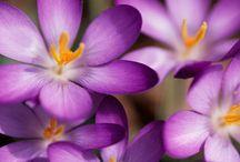 Purple / by Vicki Riser
