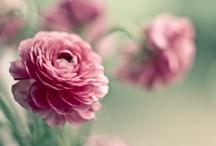 Flowers  / a kert szépségeiről
