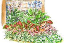 уход за садом / ландшафтный дизайн, кход за растениями
