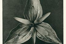 flori alb negru frumoase