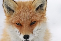 .  .  .  You're So FOXy, baby!  .  .  .  .