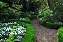 Shrubs / Shrubs, Flowering Shrubs, Hedge Plants, Evergreen Shrubs, Hydrangea
