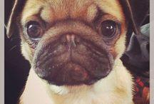 #puppytags / Fun