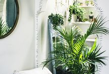 PLANTS AS INTERIOR