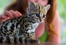 Sweet Kitties / by Katie Peters