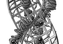 Art: Escher