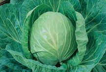Grow / grow | vegetables | home | plants | sustainable | organic