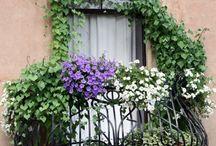 kwiaty na balkonie, werandzie, tarasie
