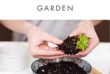 succulent garden pottery
