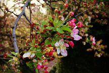 The Japanese Garden / http://www.fwbg.org/gardens/#/the-rose-garden/