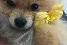 My Pomeranian World