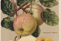 botanical-art-illustration