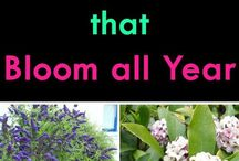 all year round shrubs