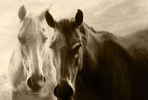 Beautiful Animals / by Andrea Beltran