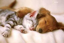 Hunde og katte