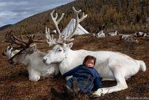 Moğolistan   TRT Avaz