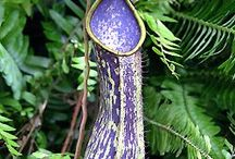 A. NEPENTHES