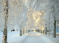 """Winter Wonderland / """"Winter is the time for comfort, for good food and warmth, for the touch of a friendly hand and for a talk beside the fire: it is the time for home."""" ― Edith Sitwell"""