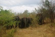 Sri Lanka / www.Uncharted101.com