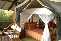 Fig Tree Camp- Masai Mara / Fig Tree Camp...located on the banks of Talek river, a five star Hotel with 80 rooms , it is well positioned to enjoy this unique phenomenon. The rolling plains around the Camp are teeming with wildebeest, gazelles and zebras during the migration months, and the Camp is situated right in the center of their migration path.in addition conference facilities are available at the camp.