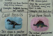 Teaching fossils