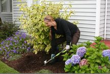 Gardening Tools / A professional landscaper's take on the best garden tools around.