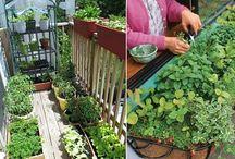 Agricultură la bloc: Ce legume se pot cultiva pe balcon