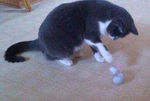Influenster Temptations Snacky Mouse toy / #CatVsMouse