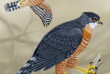 birdwatching / by Julie Hunter