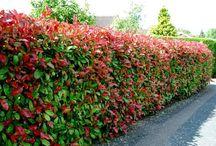 Privacy hedge